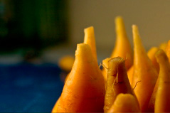 Carrot Towers