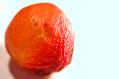 The Smallest Nectarine - 1